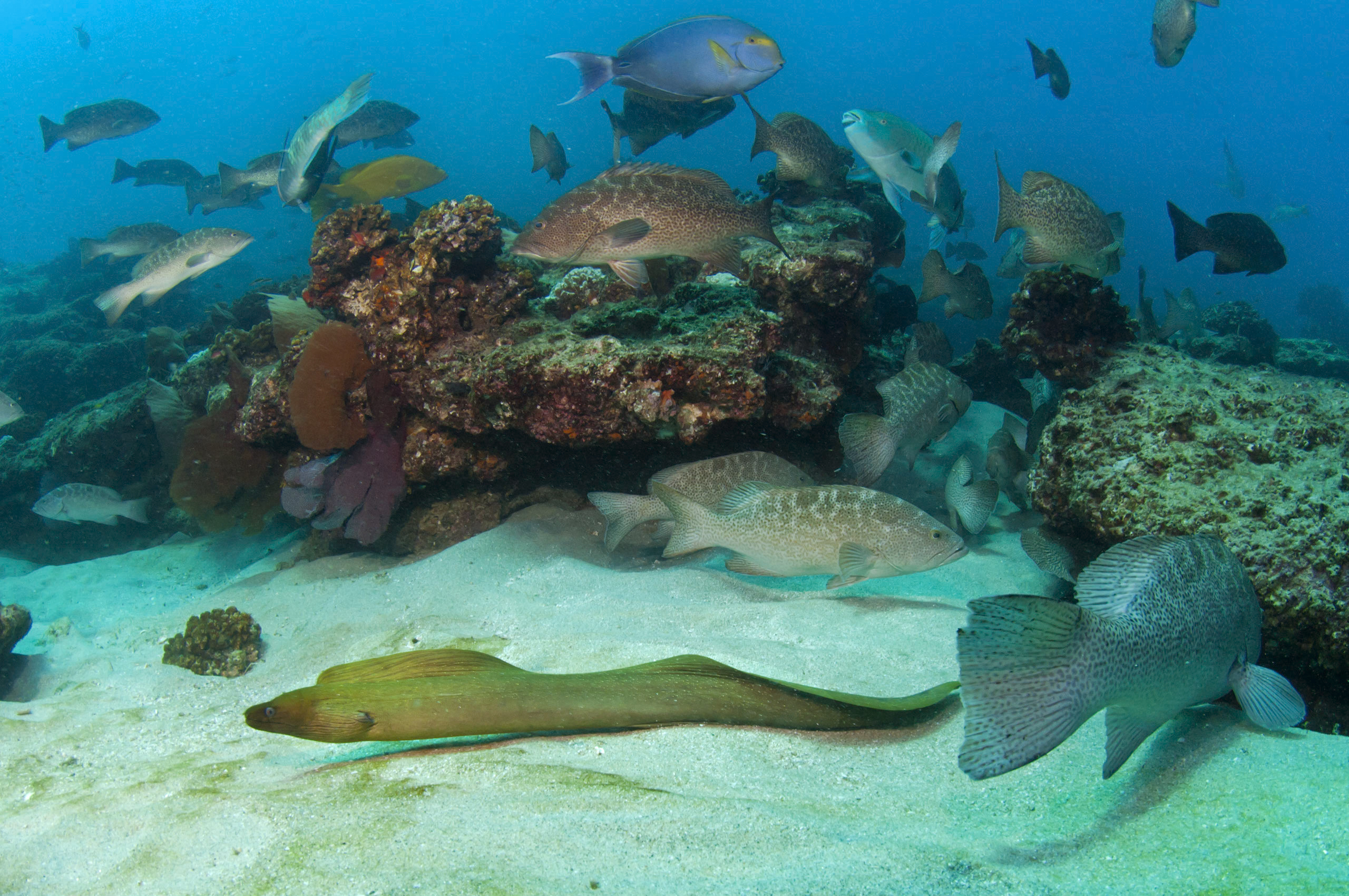 Photo of a variety of fish swimming around coral and sandy bottom habitat. Photo credit: Octavio Aburto